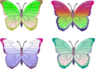 COLORbuttrfly set