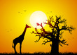 canvas print picture Giraffe and baobab at sunset
