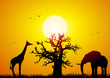 canvas print picture Elephant and giraffe with a baobab at sunset