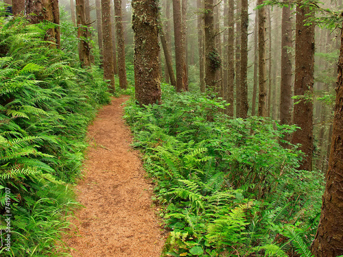 Valokuva  Path Through The Misty Forest - Cape Lookout, Oregon