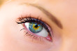 canvas print picture - The macro female eye
