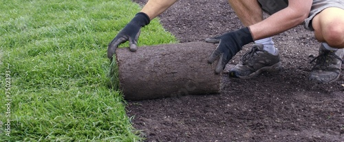 Photo sur Aluminium Olive laying sod