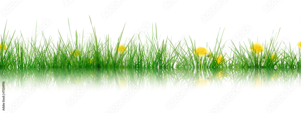 Fototapety, obrazy: Gras