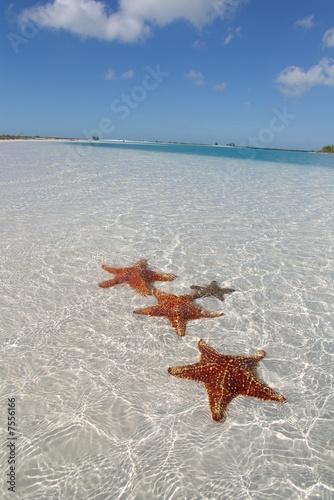 Foto-Leinwand - Sea star on the paradise beach (von Leonid Katsyka)