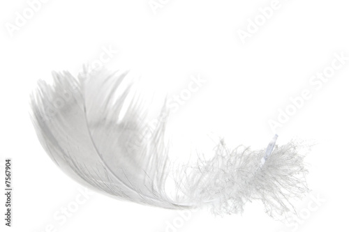 lekkie pióro na białym tle
