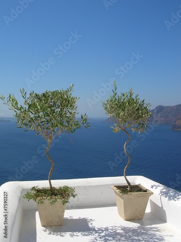 Foto-Kissen - Oliviers sur terrasse Oia Santorin (von koons)