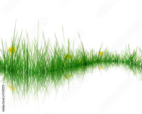 Keuken foto achterwand Paardenbloem Gras