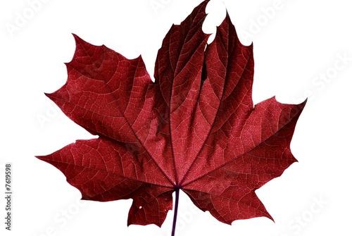 ahornblatt rot © masterric3000
