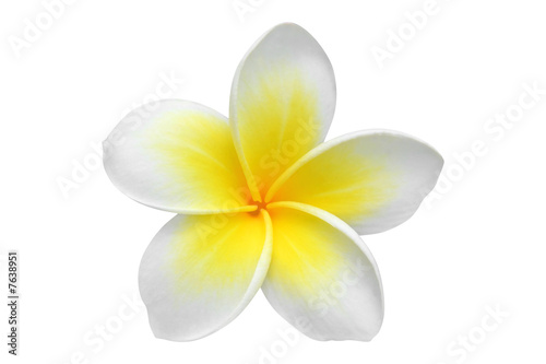 Deurstickers Frangipani Frangipani(plumeria) flower isolated on white