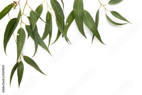 Fotorollo basic - Gum Leaf Border