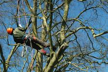 Tree Climber On A Rope
