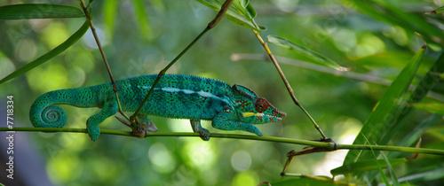 Recess Fitting Chameleon cameleon l'endormi