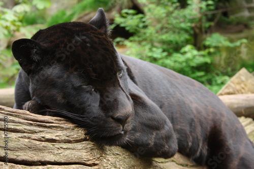 Tuinposter Panter Black Jaguar