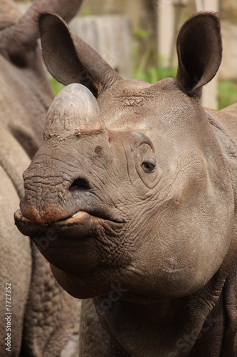 In de dag Neushoorn Female Rhino