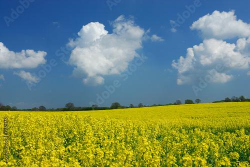 Foto op Aluminium Oranje Landschaft im Frühjahr