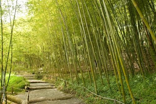 Poster Bamboe Japanese Garden