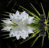 Fototapeta Fototapeta w kwiaty - parfum de zen