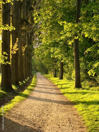 Photo Stands Road in forest Sous bois ensoleillé