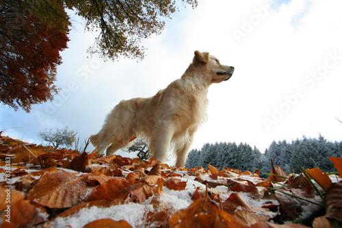 Fotografía  chien en automne