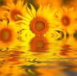 canvas print picture Sunflower close-up