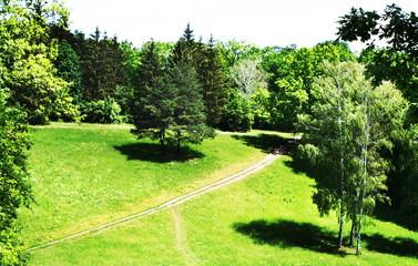 Fototapeta na wymiar Meadow