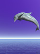 canvas print picture - Dolphin