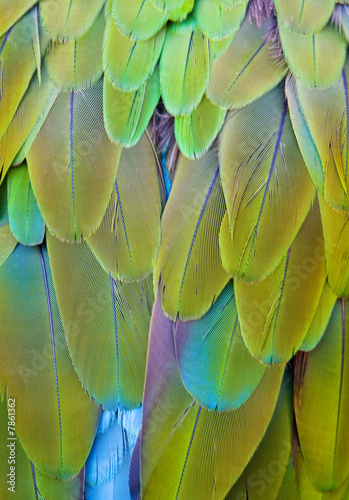 Feather colors - green and blue