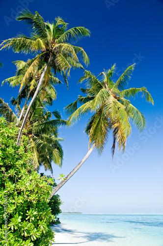 Foto-Leinwand - Tropischer Strand (von Loocid GmbH)