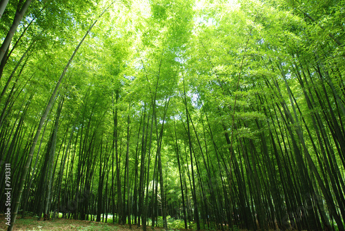 Recess Fitting Bamboo lush bamboo forest