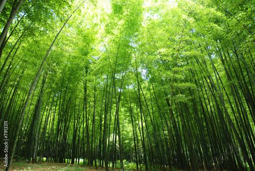 Foto op Plexiglas Bamboe lush bamboo forest