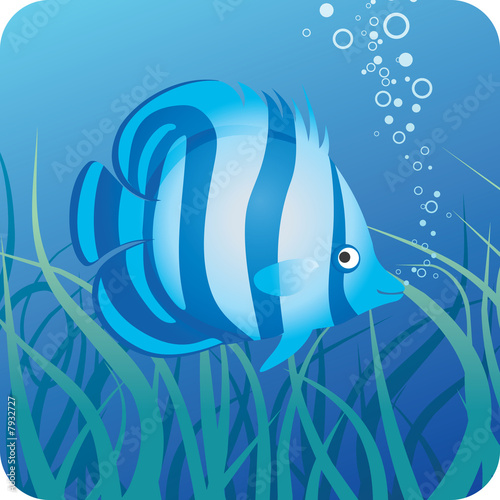 Foto-Plissee - Tropical fish under water (von Kharlamova)
