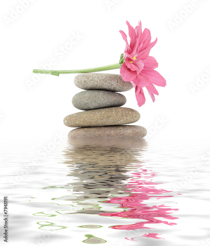Doppelrollo mit Motiv - zen / spa stones with flowers