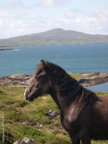Photo Wild Horse, Bantry Bay, West Coast Ireland
