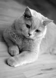 Szary kot na podłodze