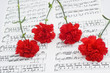 Red carnations flower on musical notes page