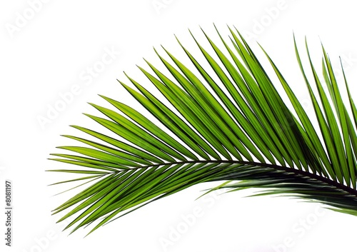 Foto op Canvas Palm boom blatt