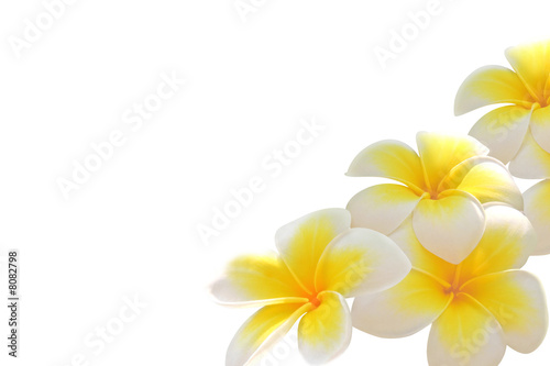 Keuken foto achterwand Bloemen Frangipani flower isolated on white background