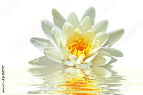 Foto op Canvas Lotusbloem Lotus flower floating in water