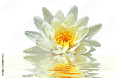 Foto op Canvas Lotusbloem Lotus flower floating in water