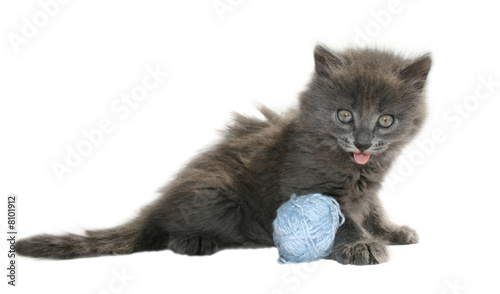 Foto auf Leinwand kitten