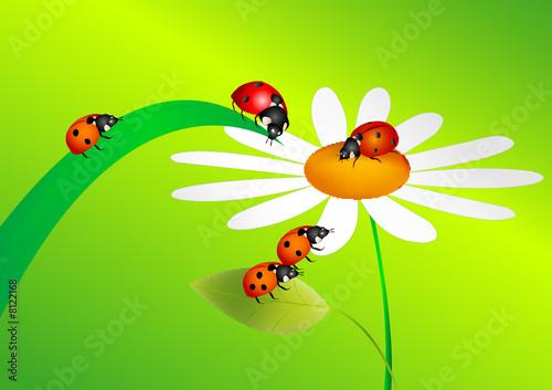Aluminium Prints Ladybugs Platz unter der Sonne