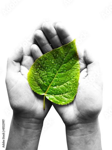Obraz green leaf at female hands - fototapety do salonu