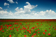 canvas print picture Green field with red poppies