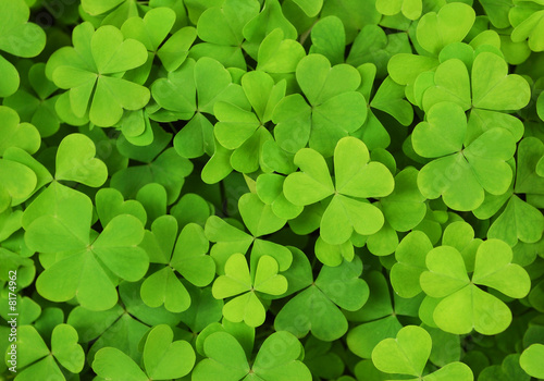 Foto-Schiebegardine ohne Schienensystem - irish shamrock clover background (von Agatha Brown)