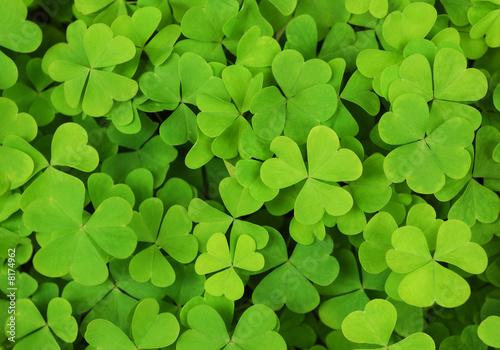 Foto-Duschvorhang - irish shamrock clover background