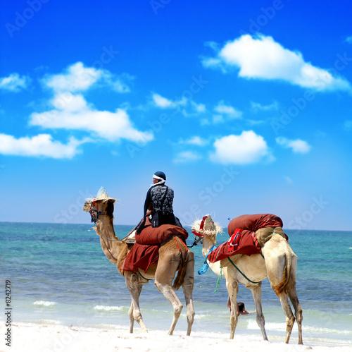 Deurstickers Tunesië Kamel reiten