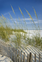 Sea Oats And Dune Fence