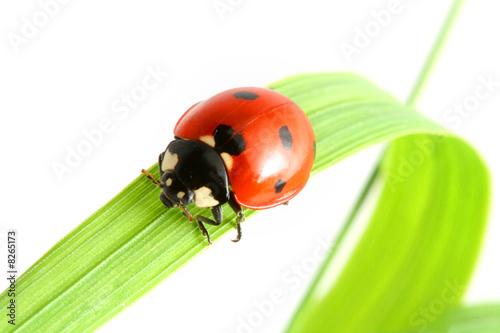 ladybug go to you