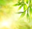 Leinwandbild Motiv Green bamboo leaves over abstract blurred background