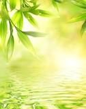 Liście bambusa odbijające się w wodzie